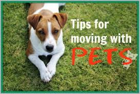 Moving Pets Guide Tips 01