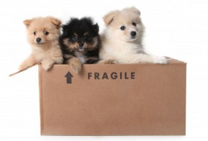 Moving Pets Guide Tips 10