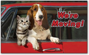 Moving Pets Guide Tips 11