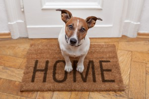 Moving Pets Guide Tips 12